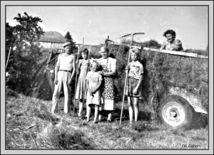 Haymaking on Skaaland